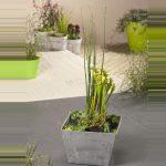mini-vijver-grijs-met-planteneiland-1-0_300x300