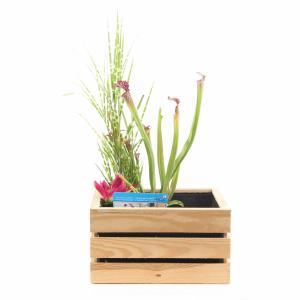 mini-vijver-in-houten-kistje-blank-1-0_300x300