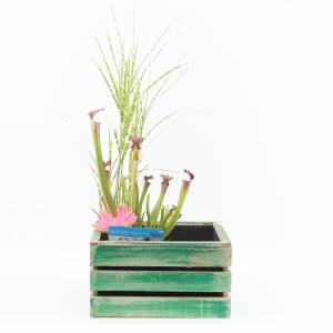 mini-vijver-in-houten-kistje-groen-1-0_300x300