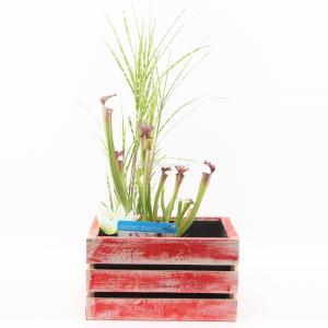 mini-vijver-in-houten-kistje-rood-1-0_300x300